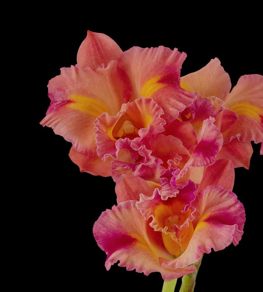 pixel 6 pro cattleya orchid dark thetechbasket.com pre