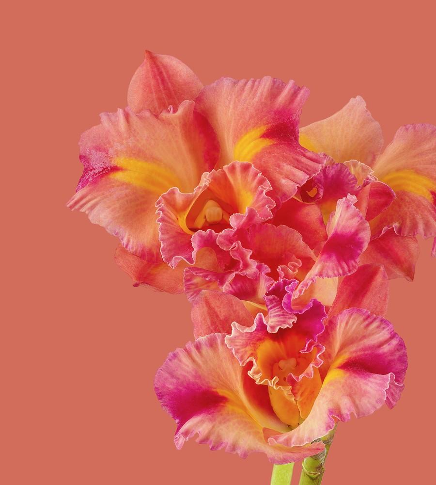 pixel 6 pro cattleya orchid light thetechbasket.com pre