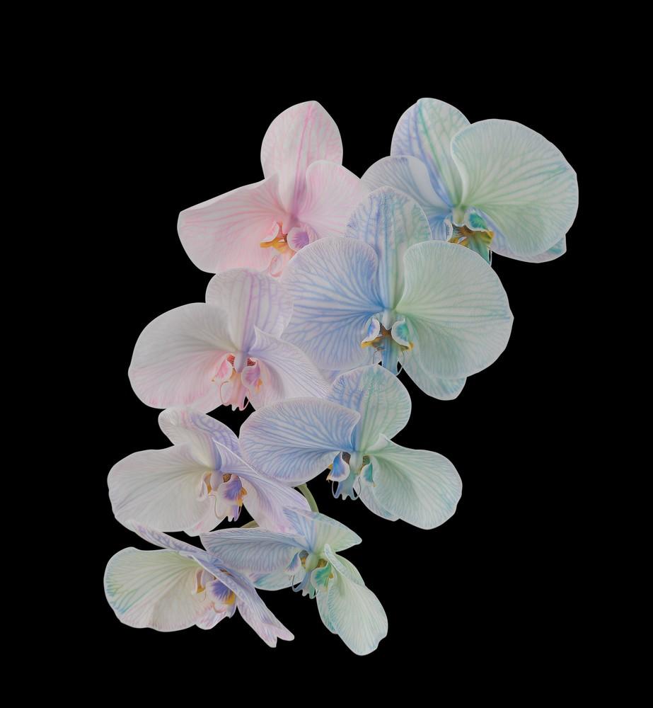 pixel 6 pro moth orchid dark thetechbasket.com pre