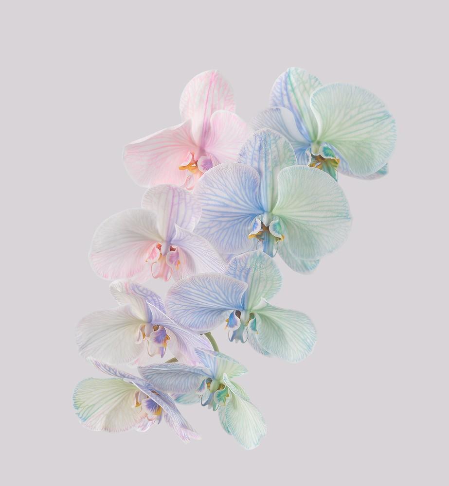 pixel 6 pro moth orchid light thetechbasket.com pre